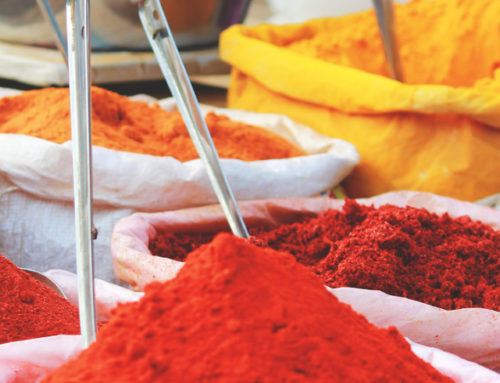 South India for Gourmet's Diary of a Foodie