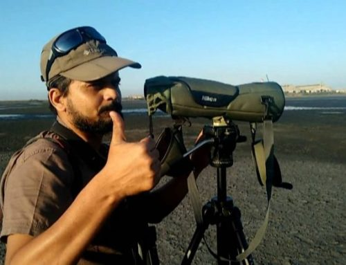 Shashank Dalvi's Big Year of Birding