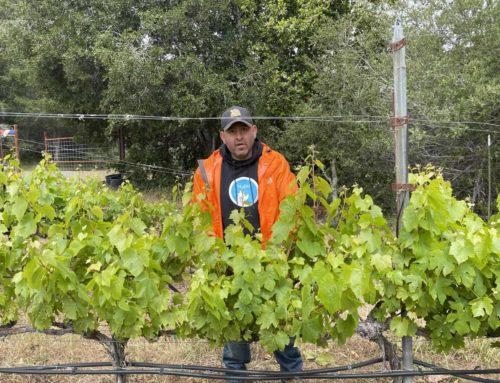 Profile of winemaker Raj Parr for Mint Lounge